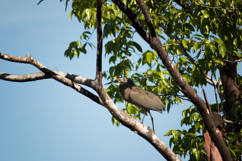 Costa Rica - Onoré du Mexique dans le parc du Corcovado