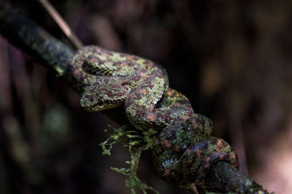 Un serpent dans le parc du Corcovado