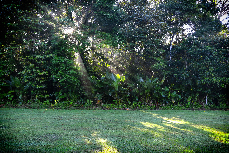 Costa Rica - Rayons de soleil dans la parc du Corcovado