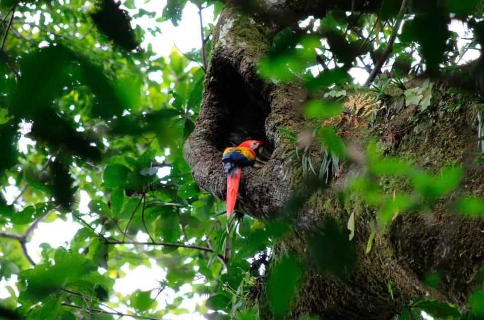Visite du parc national de Carara