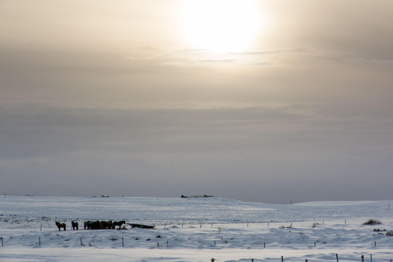 Islande - Paysage du sud
